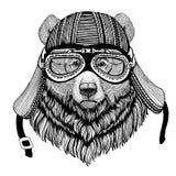 Изображение медведя гризли большой одичалой нарисованное рукой животного нося шлема мотоцикла для футболки, татуировки, эмблемы,  Стоковое фото RF