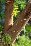 Изображение некоторых деревьев в природе Стоковые Изображения