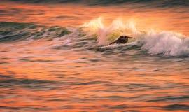 Изображение нерезкости скорости серфера на волне на заходе солнца Стоковые Фотографии RF