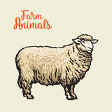 Изображение овец с черным планом Стоковые Фотографии RF
