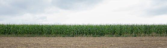 Изображение панорамы нивы Стоковая Фотография