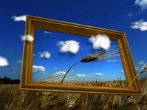 изображение поля хлеба Стоковая Фотография RF