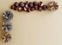 Изображение предпосылки осени с каштанами и конуса сосны с c Стоковое Фото