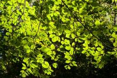 Изображение предпосылки с зеленых листьев Стоковая Фотография RF
