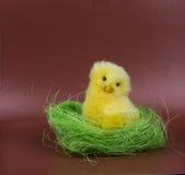 Изображение приветствию пасхи Цыпленок в зеленой траве стоковое изображение