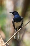 Изображение птицы на ветви на естественной предпосылке Стоковые Изображения RF