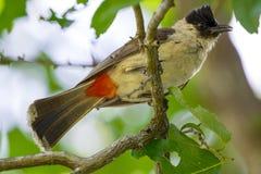 Изображение птицы на ветви на предпосылке природы Стоковые Фотографии RF
