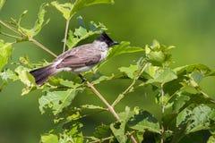 Изображение птицы на ветви на предпосылке природы Стоковая Фотография