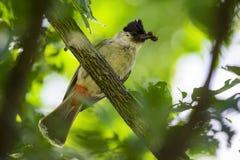 Изображение птицы на ветви на предпосылке природы Стоковая Фотография RF