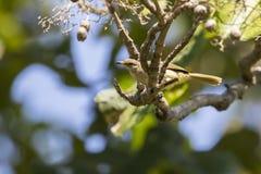 Изображение птицы на ветви Стоковое Изображение