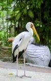 Изображение птицы на парке птицы, нерезкости и мягкой предпосылке на ligh дня Стоковое Изображение RF