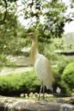 Изображение птицы на парке птицы, нерезкости и мягкой предпосылке на ligh дня Стоковые Изображения RF