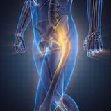 Изображение развертки рентгенографирования косточек человека Стоковое Изображение RF