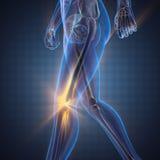 Изображение развертки рентгенографирования косточек человека Стоковые Фотографии RF