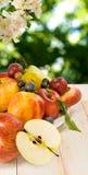 Изображение различных плодоовощей в саде Стоковые Фото