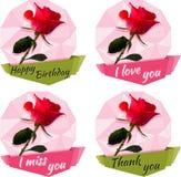 Изображение розы Стоковая Фотография
