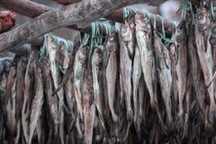 Изображение рыбы суша объект в Корее стоковые изображения rf