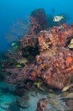 Изображение рыб на рифе в южной Флориде Стоковое Фото