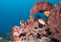 Изображение рыб на рифе в южной Флориде Стоковое фото RF