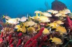 Изображение рыб на рифе в южной Флориде Стоковое Изображение