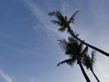 Изображение силуэта кокосовой пальмы Стоковое Фото