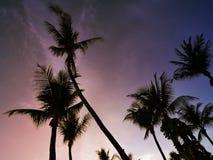 Изображение силуэта кокосовой пальмы Стоковые Фотографии RF