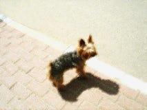 Изображение собаки йоркширского терьера Стоковые Изображения
