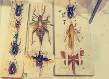 изображение собрания жука с штырем Стоковая Фотография