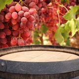 Изображение старого бочонка вина дуба перед ландшафтом двора вина Полезный для монтажа дисплея продукта Стоковые Изображения RF
