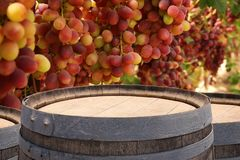 Изображение старого бочонка вина дуба перед ландшафтом двора вина Полезный для монтажа дисплея продукта Стоковая Фотография