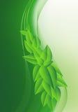 Изображение с молодыми зелеными листьями Стоковая Фотография RF