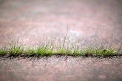 Засевайте травой до конкретный тротуар 02 Стоковая Фотография
