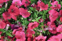 изображение фрактали цветков предпосылки красивейшее Стоковые Изображения