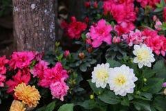 изображение фрактали цветков предпосылки красивейшее Стоковое Изображение RF