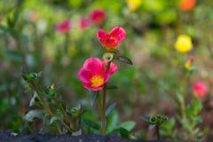Изображение цветка, розовое изображение цветка, изображение цветка HD стоковое изображение rf
