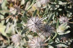 Изображение цветка Стоковое Фото