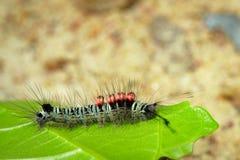Изображение черепашки гусеницы на зеленых листьях Стоковые Изображения