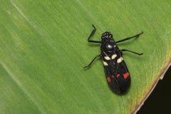 Изображение черного жука на зеленых листьях Стоковые Фото