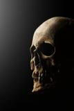 изображение черноты предпосылки 3d людское представило череп Влияние пирофакела Стоковые Фотографии RF