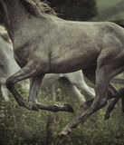 Изображение элементов тела лошади Стоковые Изображения