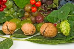 Изображение ягод и чокнутого конца-вверх стоковое фото rf