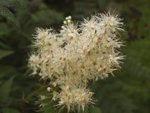 Изображение blossoming ветви Стоковая Фотография