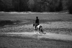Изображение Bw с человеком и лошадью Стоковое фото RF