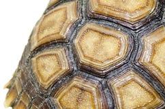 Изображение Carapace черепахи закрытое поднимающее вверх. стоковое фото rf