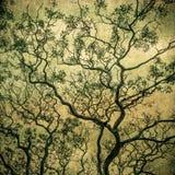 Изображение Grunge темного леса, совершенной предпосылки хеллоуина Стоковая Фотография
