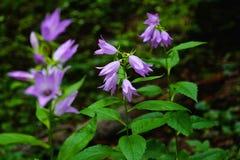 изображение grunge цветков колоколов Стоковое Изображение RF