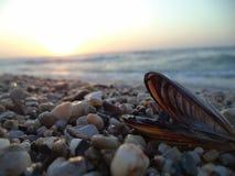 Изображение seashell стоковое изображение