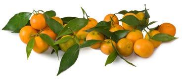 Изображение tangerines на белой предпосылке Стоковое Изображение