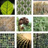 9 изображений различных листьев в природе стоковые изображения