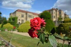 Изображения Англии красными поставленные цветками Лондона Hampstead запахов розовыми снимают замок Стоковое Изображение RF